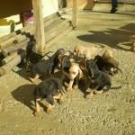Cuccioli5