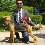 Diablo, miglior GIOVANE ASSOLUTO al Raduno delle razze Italiane, Firenze 2014